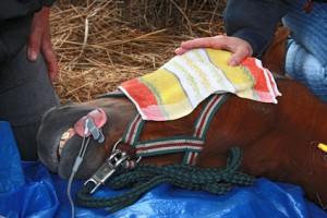 Pferde Operationskostenversicherung